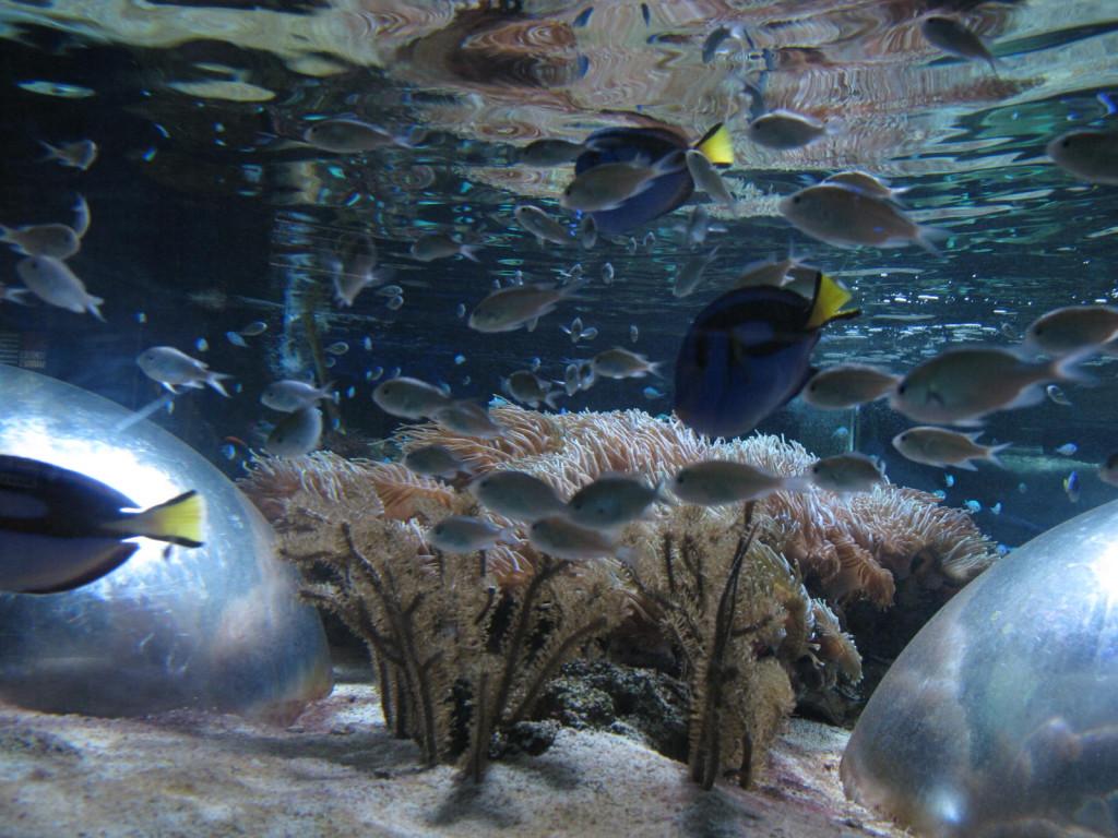 морской парк marineland антиб